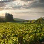 Rhys Vineyards CWA Settlement